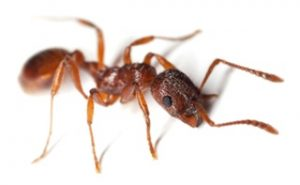 Ant Control Cape Town specializes in Ant Control in any form.
