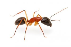 Ants problems are no problem for Insect Control Zonnebloem.