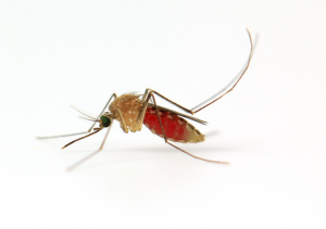 Mosquito Control  have the means to control any level of Mosquito Infestations.