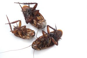 Contract Pest Control services  are masters in pest elimination and management.