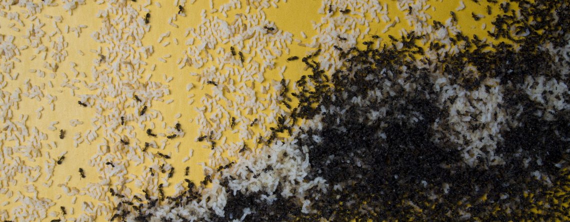 Ant Infestation around your home