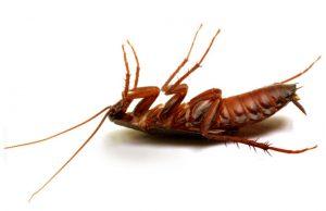 24 hour Pest Control Cape Tonw service by your Pest Exterminators that care.