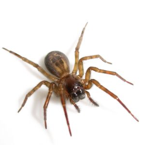 Spider Control Cape Town take care of all your unwanted crawling insects. Spiders and other arachnids exterminated by your local experts here at Cape Town Pest Control